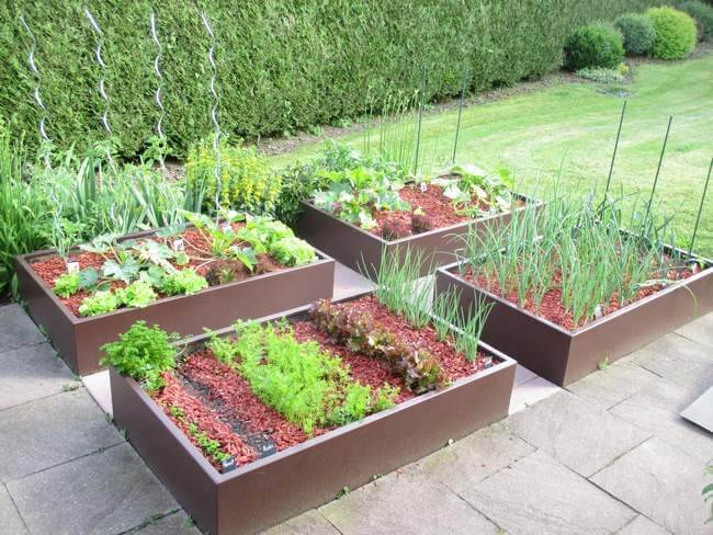 Potager-en-carré-design-vrai plantes compressed