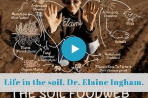 ★★★★☆ USALa microbiologie du sol pour une nouvelle génération de jardiniers.