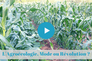 mooc, permaculture, agroecologie