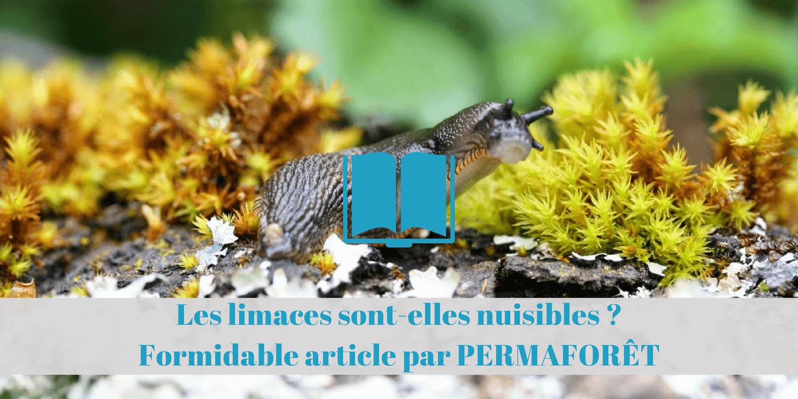 eviter eliminer controler limaces jardin permaculture