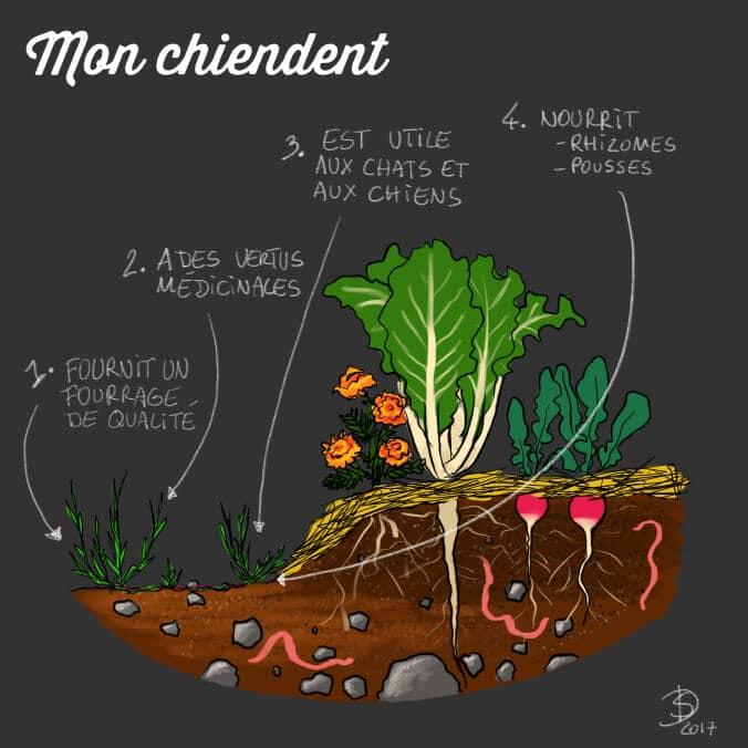 Idées en vrac. Le blog du jardin bordeli-bucolique et autres inventions.