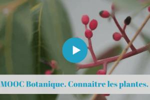 ★★★★☆ FranceInitiation à la Botanique. Comment et pourquoi observer les plantes.