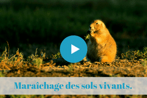 maraichage, sol vivant, konrad schreiber