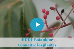 Mooc Botanique. Initiation. Connaître les plantes.