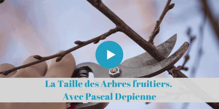 taille arbres fruitiers, tutoriels, permaculture, pascal depienne