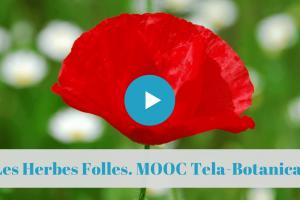 """★★★★★ France MOOC. Les Herbes Folles. Ces """"mauvaises herbes"""" qui ne sont pas si mauvaises …"""