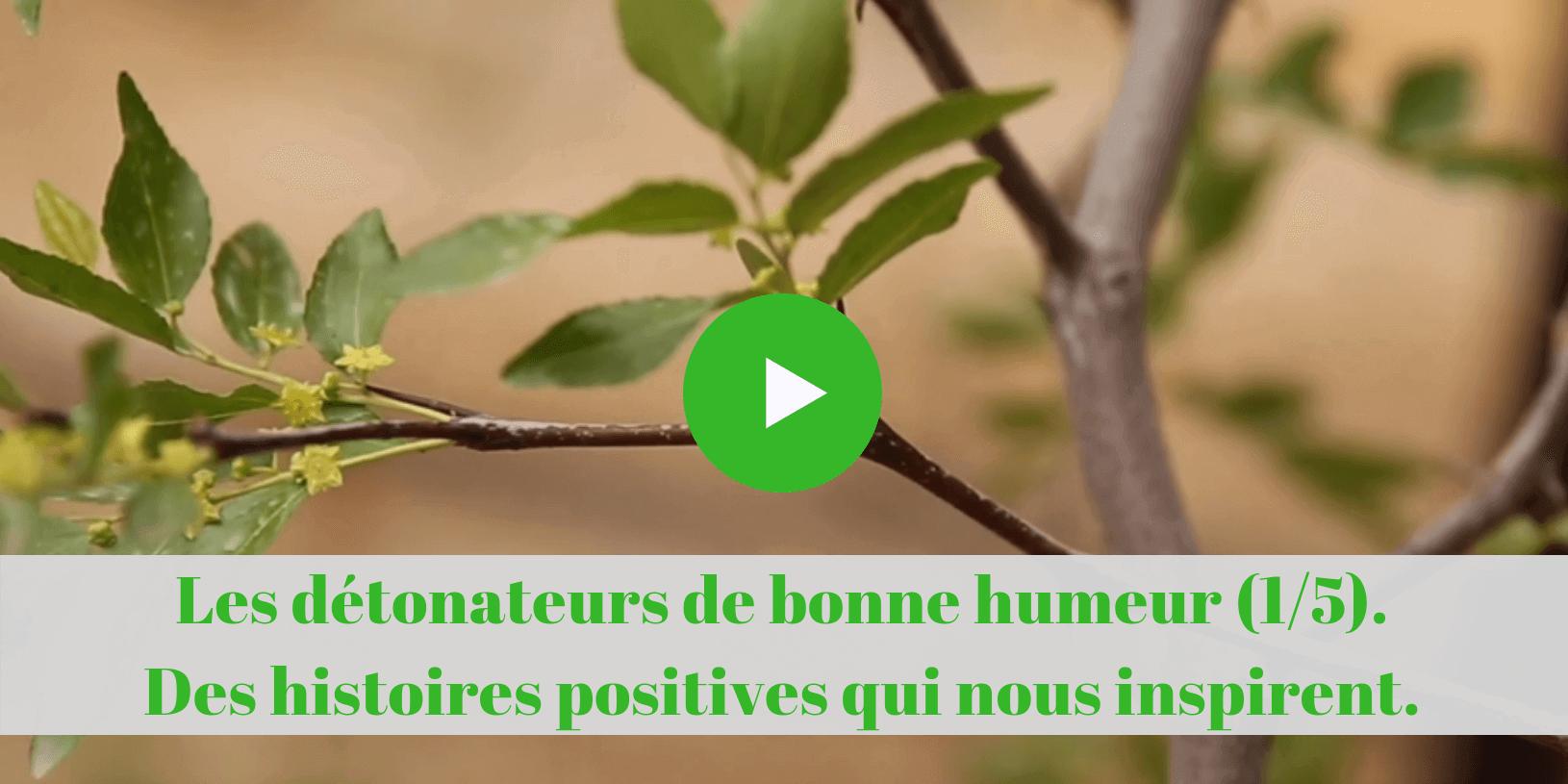 permaculture, cours en ligne, histoires, positives, formations, vidéo