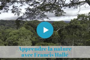 forêt, documentaire, francis, hallé, formation