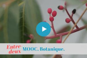 ★★★☆☆ France MOOC. La botanique pour un soir d'hiver.