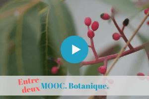 mooc, botanique, formation, distance, permaculture