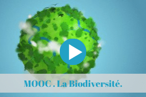 mooc, biodiversite, permaculture, formation