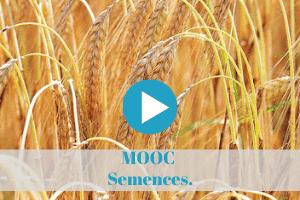 permaculture, cours, enligne, a distance, semences, mooc